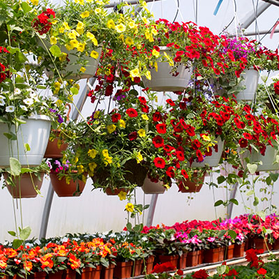 Biocontrol and Integrated Crop Management products for your hanging baskets, ornamentals