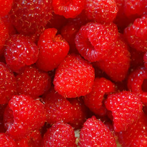 Biocontrol and Integrated Crop Management products for your raspberries crop
